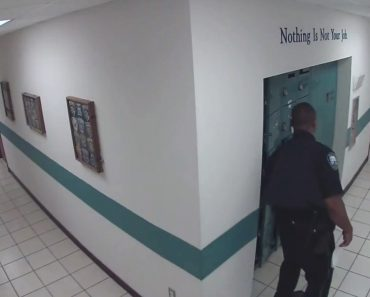 Imagens De Vigilância Captam a Valentia De Um Segurança Ao Cruzar-se Com Pequeno Intruso 7