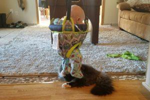 "Gato Descobre Que o Bebé Da Casa é o Seu Novo ""Brinquedo"" Favorito 13"