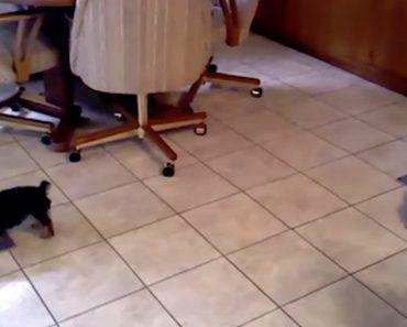 Dupla De Cachorrinhos Tem Forma Única De Partilhar a Refeição 3