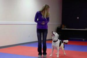 Inteligente Cão Mostra o Seu Talento Com Incrível Coreografia 9