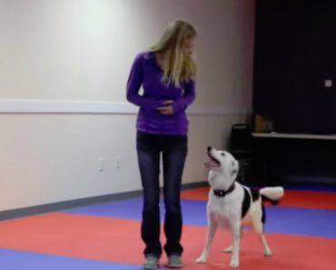 Inteligente Cão Mostra o Seu Talento Com Incrível Coreografia 2