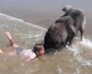 """Cão Protetor """"Salva"""" a Sua Pequena Dona Ao Pensar Que Ela Corre Risco No Mar 3"""