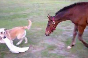 Provocador Cão Desafia Cavalo Para Brincar Com Ele 10