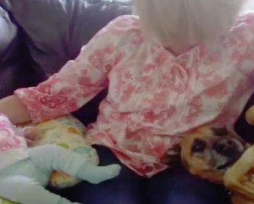 Cão Ciumento Tenta Roubar As Atenções Do Bebé 2