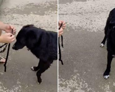 Temperamental Cão Faz Enorme Birra Porque Não Quer Ir Embora Da Praia 1
