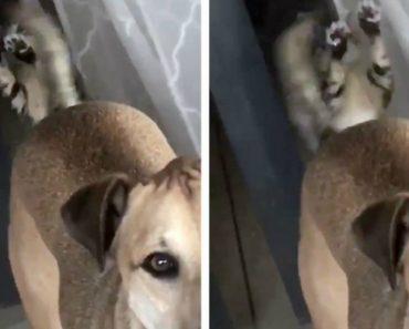 Gato Quase Endoidece Ao Ver a Cauda Do Cão a Abanar No Outro Lado Do Vidro 9