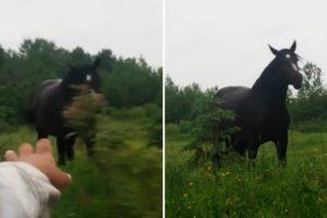 Cavalo Deixa-se Contagiar Pelo Som Da Música Vinda De Um Carro Que Passava Na Estrada 7