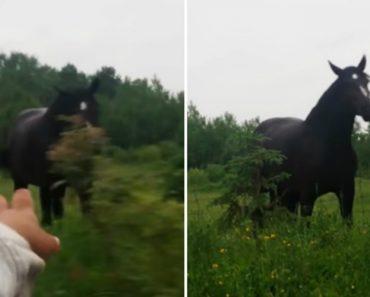 Cavalo Deixa-se Contagiar Pelo Som Da Música Vinda De Um Carro Que Passava Na Estrada 9