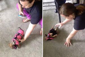 Pequena Cadelinha Não Sabe Como Andar Com o Seu Novo Colete Salva-Vidas 10