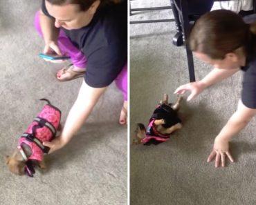 Pequena Cadelinha Não Sabe Como Andar Com o Seu Novo Colete Salva-Vidas 9