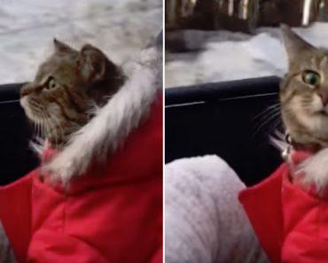 Gato Fica Verdadeiramente Admirado Com o Que Vê Enquanto Viaja Com o Dono 7