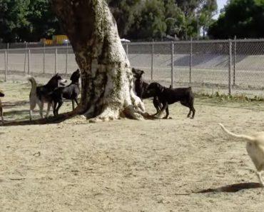 A Extraordinária Fuga De Um Esquilo Ao Ser Perseguido Por Vários Cães 9