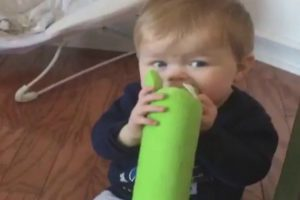Bebé Não Fica Satisfeito ao Descobrir Que Está a Morder o Brinquedo Do Cão 10