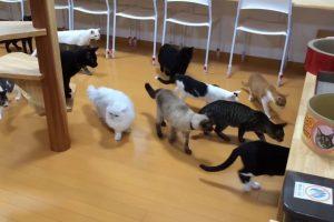 Gatos Ficam Curiosos Com Pequeno Aspirador, Mas Depressa Se Afastam 10