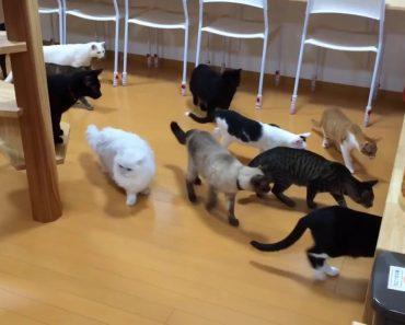 Gatos Ficam Curiosos Com Pequeno Aspirador, Mas Depressa Se Afastam 7