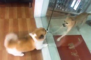 Cães Enraivecidos Ladram Um Para o Outro, Mas Tudo Muda Quando Alguém Abre a Porta De Vidro 10