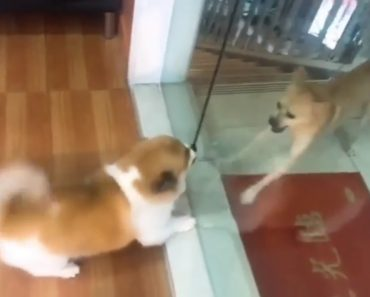Cães Enraivecidos Ladram Um Para o Outro, Mas Tudo Muda Quando Alguém Abre a Porta De Vidro 7