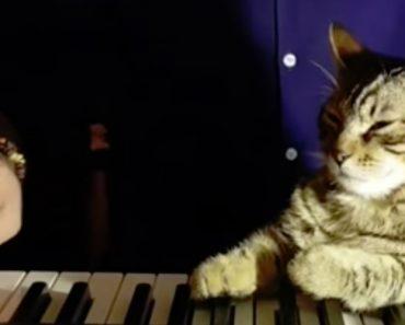 Este Gato é Um Verdadeiro Pianista, Até a Dormir Consegue Tocar 3
