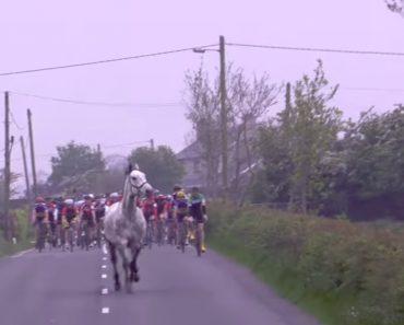 Cavalo Aparece Inesperadamente Em Prova De Ciclismo 7