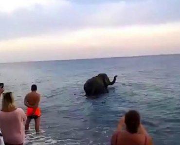 """Elefante Escapa De Circo e Vai Dar Um """"Mergulho"""" No Mar 9"""