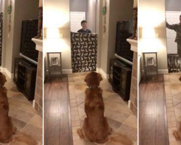 O Mais Ternurento Reencontro De Um Cão Com o Seu Dono Que Regressou Da Guerra 6