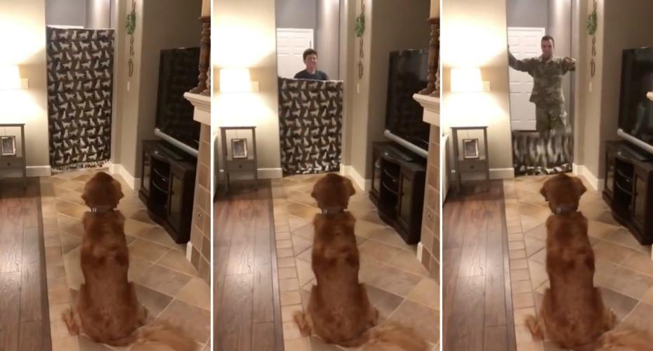adeb81cb0d O Mais Ternurento Reencontro De Um Cão Com o Seu Dono Que Regressou Da  Guerra