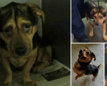 Casal Vê Foto De Cão Triste Em Abrigo e Conduz Seis Horas Para o Adotar 5