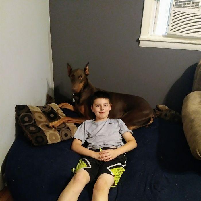Menino Vende Todos Os Seus Brinquedos Para Ajudar a Pagar o Tratamento Do Seu Cão Doente 1