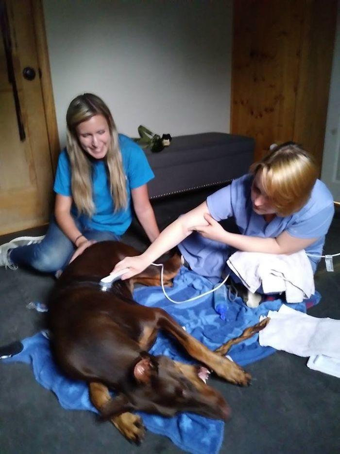 Menino Vende Todos Os Seus Brinquedos Para Ajudar a Pagar o Tratamento Do Seu Cão Doente 10