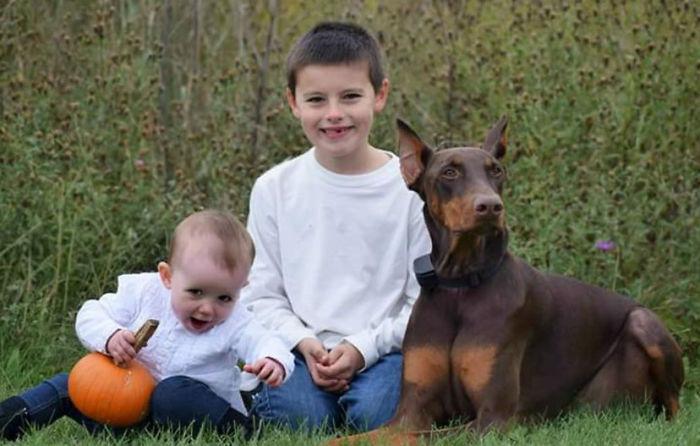 Menino Vende Todos Os Seus Brinquedos Para Ajudar a Pagar o Tratamento Do Seu Cão Doente 2