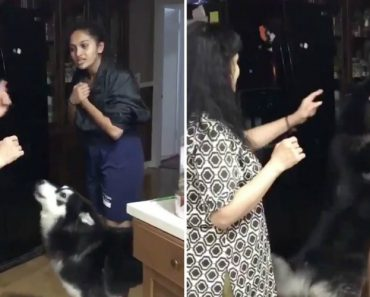 Cão Faz De Tudo Para Parar Uma Discussão Entre Mãe e Filha 8