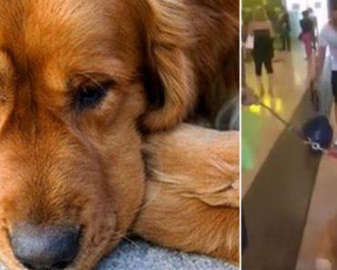 Cão Fica Chocado Ao Reencontrar Dono 3 Anos Depois, Mas Assim Que Se Recompõe Faz Incrível Receção 9