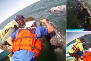 Baleia Aproxima-se De Turistas Para Dar a Conhecer a Sua Cria 10
