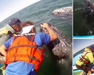 Baleia Aproxima-se De Turistas Para Dar a Conhecer a Sua Cria 3