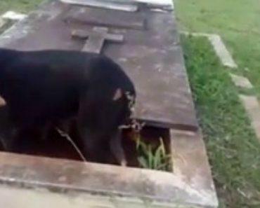 Cadela Dá à Luz 11 Filhotes Dentro De Túmulo Em Cemitério 1