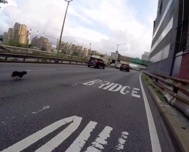 Ciclista Faz Perseguição Tensa Para Apanhar Cão Que Fugiu Nas Ruas De Nova Iorque 7