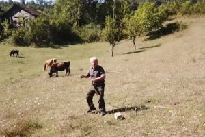 Agricultor Fica Apavorado Ao Ver Drone Pela 1ª Vez 9