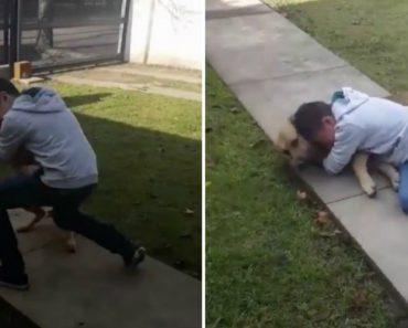 Menino Não Contém a Emoção Ao Reencontrar o Seu Cão Após Estar 8 Meses Desaparecido 6