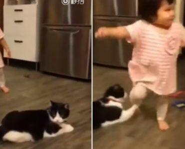 Vídeo De Gato a Colocar Pata Para Criança Tropeçar Torna-se o Novo Sucesso Da Internet 2