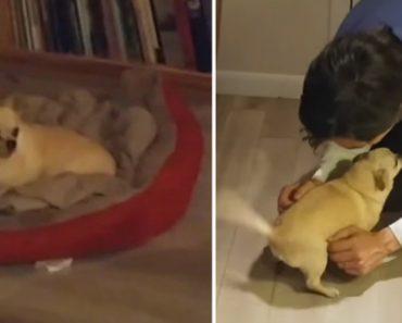 O Maravilhoso Reencontro De Uma Cadela Com o Seu Dono Depois De 2 Meses Separados 8