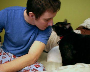 Comovente Vídeo Explica Como Um Gato Salvou a Vida De Um Soldado 3