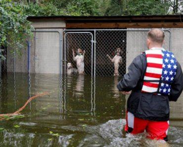 Herói Voluntário Salva Seis Cães Encurralados Em Canil Durante Furacão Florence 6