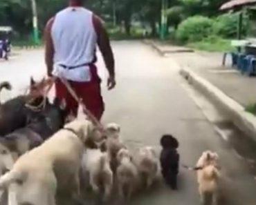 Homem Consegue Passear 15 Cães Ao Mesmo Tempo De Forma Pacífica 4
