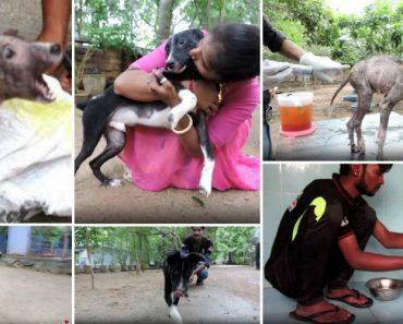 Resgate De Um Cachorrinho Aterrorizado e Ferido e a Sua Incrível Transformação Em Pouco Tempo 4