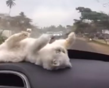 Como Manter o Seu Gato Entretido Durante Uma Viagem De Carro 8
