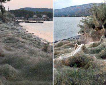 Praia Na Grécia Coberta Por 300 Metros De Teia De Aranha 4
