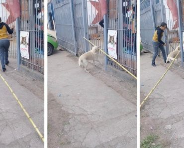 Teimoso Cão Insiste Em Passar Por Portão Com Pau De 4 Metros Na Boca 9