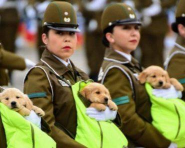 Futuros Cães Polícias Foram A Grande Atração Em Parada Militar 7