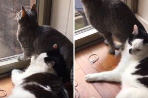 Gato Tenta Ser Carinhoso Mas Descobre Que Tem Um Amigo Ingrato 9