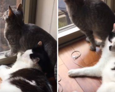 Gato Tenta Ser Carinhoso Mas Descobre Que Tem Um Amigo Ingrato 1
